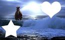cheval qui cour dans la mer
