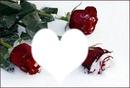 Розы на снегу...