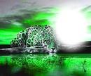 tigre fond vert