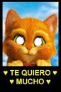 gato te quiero