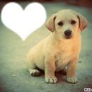 Coeur de Chiot <3