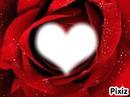 rose d'amour scintillante