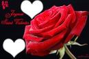 la rose de l'amour intouchable