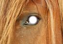 Dans les yeux d'un Cheval