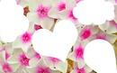 4 photos avec fleur blanche et rose