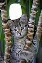 Cc Gato