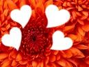 Fleur de coeurs