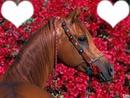 Ton meilleure amies :le cheval