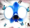 3 photos orchidée fleur papillon iena