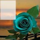 Cc rosa turqueza