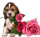 chien a la rose
