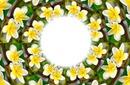 Fleur Tiarer jaune 2