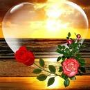 renewilly corazon transparente y rosas