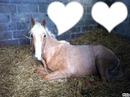 cheval beige
