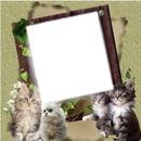Cadre avec des chats