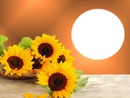 Podzim,slunečnice