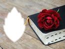 Livre-rose rouge