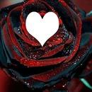 rosa em coração