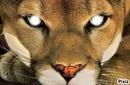 Lion(;
