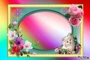 cadre fleurs chaton