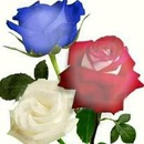 renewilly 3 rosas