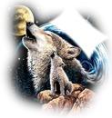 loup au claire de lune et de terre