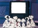 dalmatiens devant tv