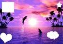 Couché de soleil avec Dauphin♥