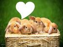 4 lapinous avec coeur
