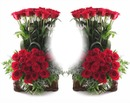 Cc entre rosas rojas