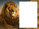león#3