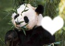 mon panda grincheux