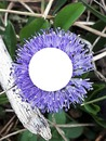 1 fleur Cris