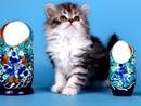 chaton bleu