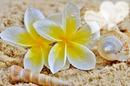 Tipanié fleur