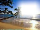 sable et arbre