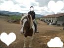 magnifique cheval