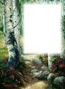 Arbres-bouleaux-forêt