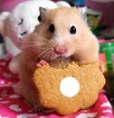 hamster hecho por pamela caro paredes