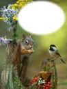 Écureuil - oiseau