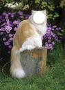 Prend l'apparence d'un chat ( 1 photo )