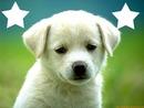 perro lindo