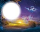 Papillons-coucher de soleil-paysage-nature