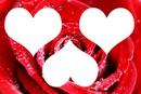 Love love Ilove you
