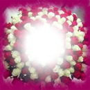 Monalisa-Rote & Weiße Rosen