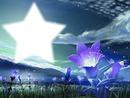 Fleur d'étoile