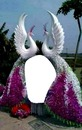renewilly palomas