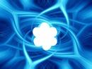 fleur dans fond bleu