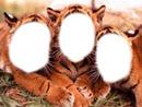 Grrrr!!!! Les 3 tigres