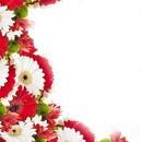 biało czerwony